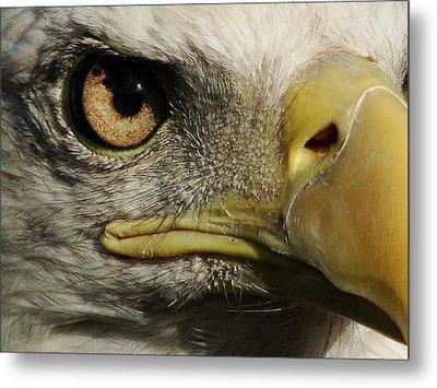 Bald Eagle Eye Metal Print