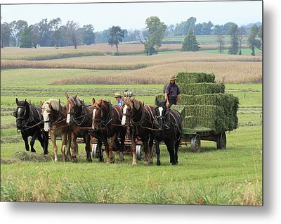 Baling The Hay Metal Print by Lou Ford