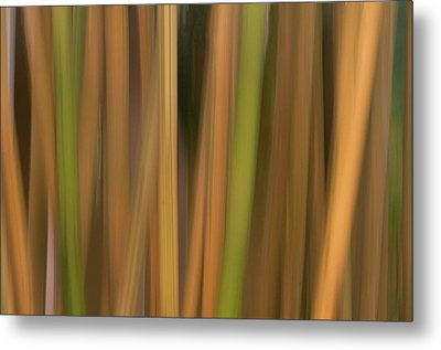 Bamboo Abstract Metal Print by Carolyn Dalessandro
