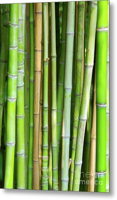 Bamboo Background Metal Print