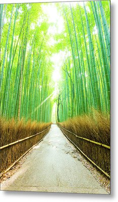 Bamboo Tree Forest Morning God Ray Straight Road V Metal Print
