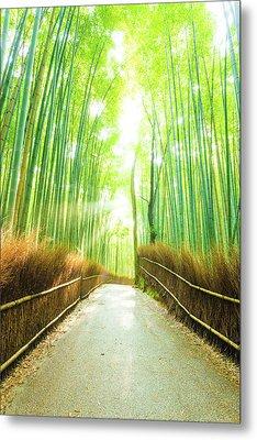 Bamboo Tree Forest Sun Light Beams Empty Road Metal Print