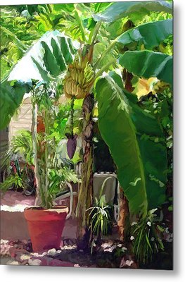 Metal Print featuring the painting Banana Tree by David  Van Hulst