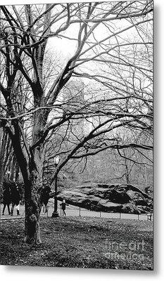 Bare Tree On Walking Path Bw Metal Print by Sandy Moulder