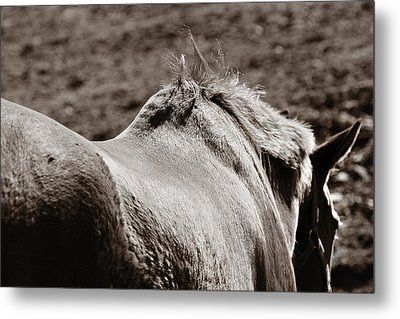 Bareback Metal Print by Angela Rath
