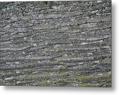Bark In The Woods Metal Print by Ron Read