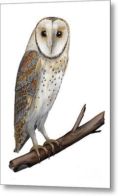 Metal Print featuring the painting Barn Owl Screech Owl Tyto Alba - Effraie Des Clochers- Lechuza Comun- Tornuggla - Nationalpark Eifel by Urft Valley Art