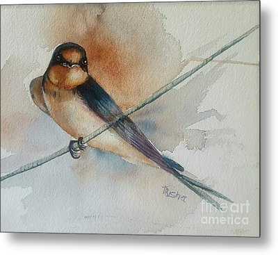 Barn Swallow Metal Print by Patricia Pushaw