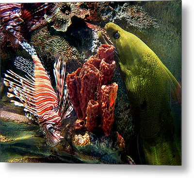 Barnacle Buddies Metal Print by Bill Pevlor