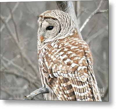 Barred Owl Close-up Metal Print by Kathy M Krause