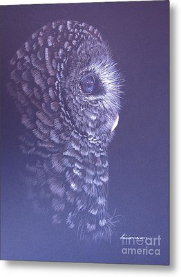 Barred Owl Metal Print by Laurianna Taylor