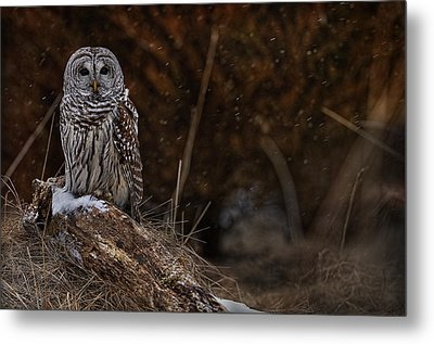 Metal Print featuring the photograph Barred Owl On Log by Michael Cummings