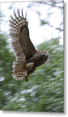 Barred Owl Taking Flight Metal Print