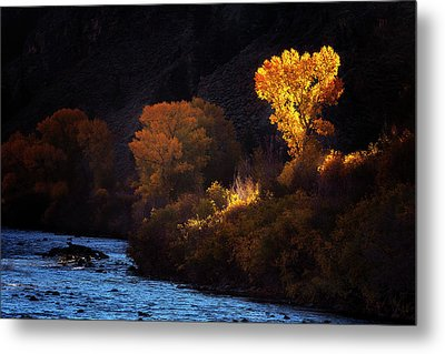 Metal Print featuring the photograph Basking In The Light by Andrew Soundarajan