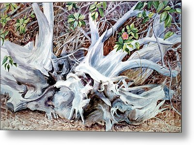 Bass River Cedar Stump Metal Print