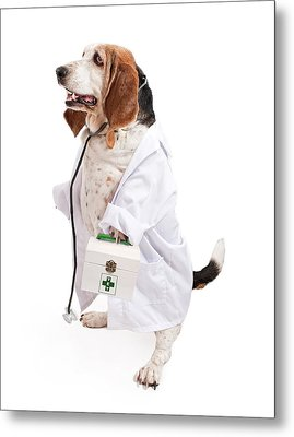 Basset Hound Dog Dressed As A Veterinarian Metal Print by Susan Schmitz