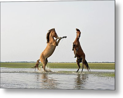Battling Mustangs Metal Print