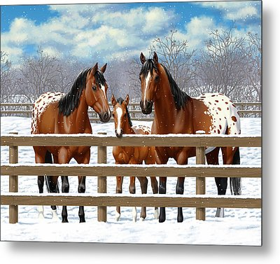 Bay Appaloosa Horses In Snow Metal Print by Crista Forest