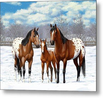 Bay Appaloosa Horses In Winter Pasture Metal Print