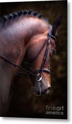 Bay Horse Head Metal Print