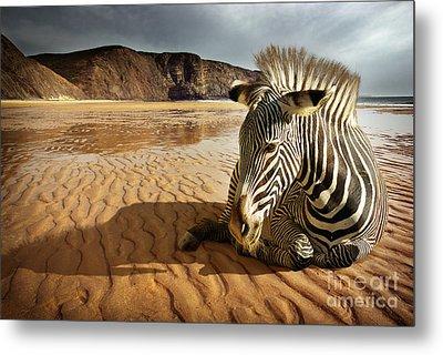 Beach Zebra Metal Print by Carlos Caetano