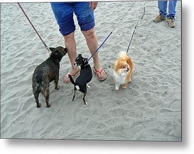 Beachen Toy Doggies Metal Print by Pamela Patch