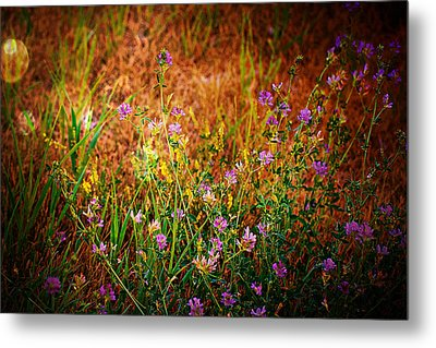 Beautiful And Wild Flowers Metal Print