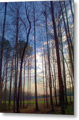 Beautiful Day Metal Print by Beverly Hammond