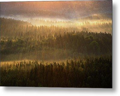 Beautiful Foggy Forest During Autumn Sunrise, Saxon Switzerland, Germany Metal Print