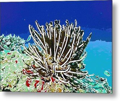 Beautiful Marine Plants 11 Metal Print