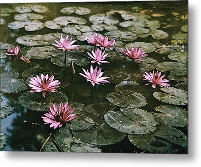Beautiful Pink Lotus Water Lilies Bloom Metal Print by W. Robert Moore