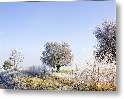 Beautiful Winter Background With Snow Tipped Trees Metal Print by Jorgo Photography - Wall Art Gallery