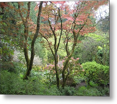 Beauty Among The Trees Metal Print by Shirley Sirois