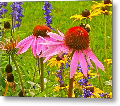 Beauty And The Bees Metal Print by Randy Rosenberger