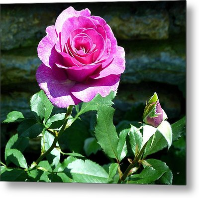 Metal Print featuring the photograph Beauty And The Bud by Will Borden