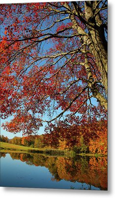 Metal Print featuring the photograph Beauty Of Fall by Karol Livote