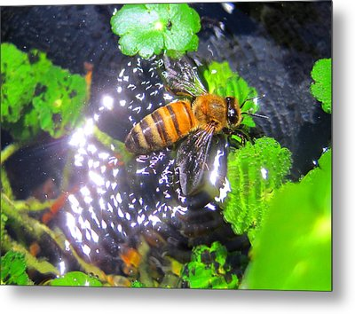 Bee In Distress Metal Print by Catherine Natalia  Roche