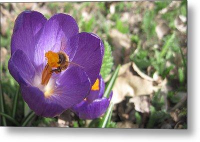 Bee In Purple Flower Metal Print by Luke Cain