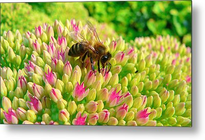 Metal Print featuring the photograph Bee On Flower by Larry Keahey