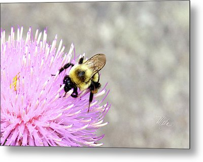 Bee On Pink Bull Thistle Metal Print by Meta Gatschenberger