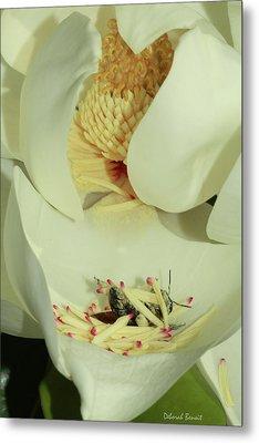 Bee Pollen Overdose Metal Print by Deborah Benoit