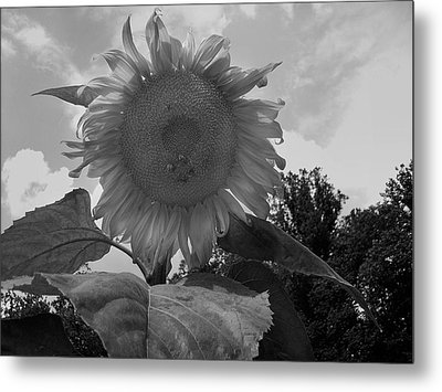 Metal Print featuring the digital art Bees On A Sunflower by Chris Flees