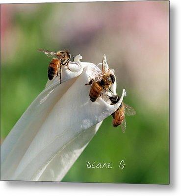 Bees On Angel Trumpet Metal Print