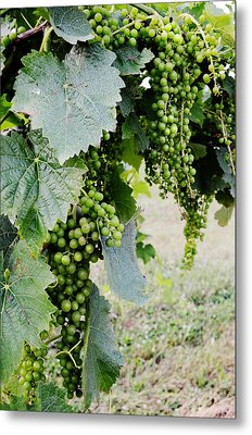 Before The Harvest Metal Print by La Dolce Vita