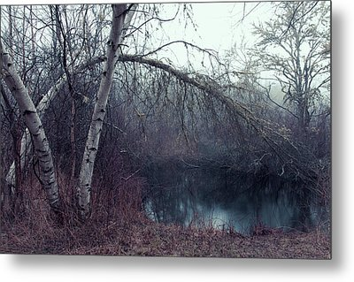 Bending Birch Metal Print by Andrew Pacheco