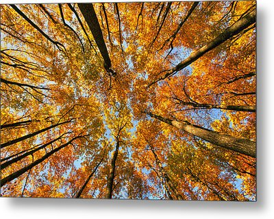 Beneath The Canopy Metal Print by Edward Kreis