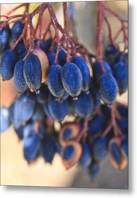 Berries Blue Too Metal Print