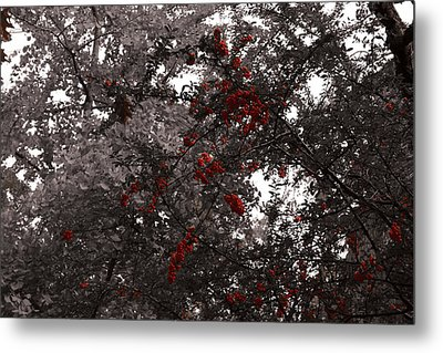 Berry Trees Metal Print by Bill Ades