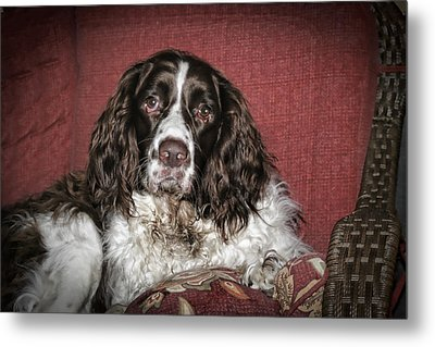 Best Friend Metal Print by Christina Durity