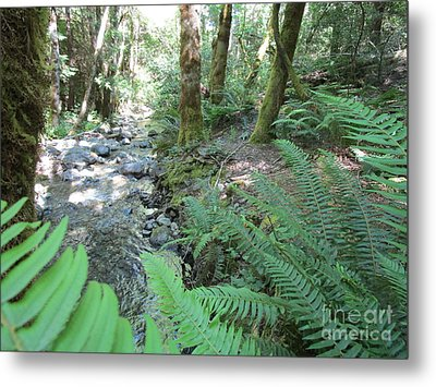 Metal Print featuring the photograph Beyond The Ferns by Marie Neder